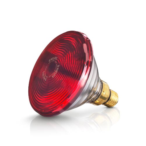 Bóng đèn hồng ngoại Philips 150w